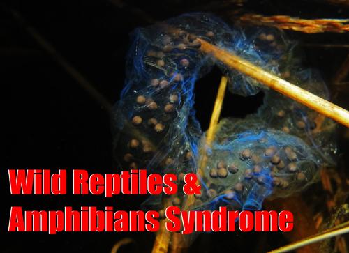 Wild Reptiles & Amphibians Syndrome