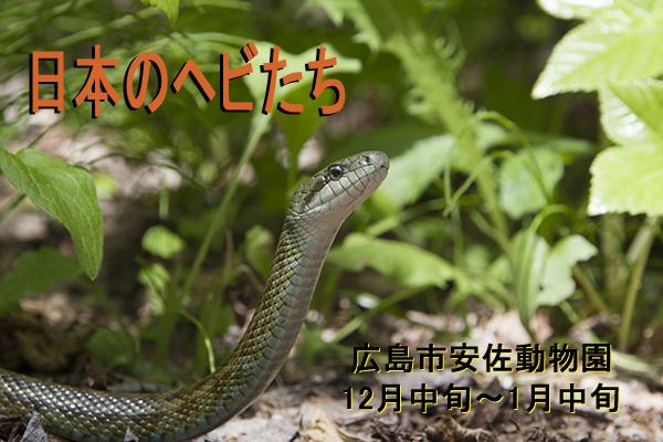 徳田龍弘写真展・日本のヘビたち