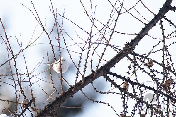 1月末~2月(鳥)